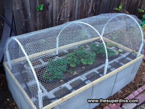 Raised Cinderblock Bed with Strawberries and wire covering